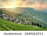 Tea Plantations In Darjeeling ...