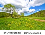 spring landscape with blooming... | Shutterstock . vector #1040266381
