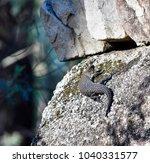 lizard  skink  enjoying hot... | Shutterstock . vector #1040331577