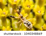 sunflower and insect   Shutterstock . vector #1040348869