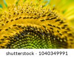 sunflower and insect   Shutterstock . vector #1040349991