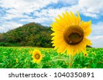sunflower and insect   Shutterstock . vector #1040350891