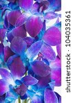 Deep Purple Orchid Branch As A...