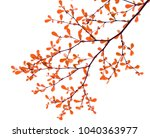 colorful of fresh leaves on... | Shutterstock . vector #1040363977