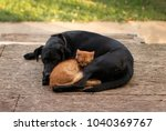 Stock photo cute rusty cat and black dog sleeping together 1040369767