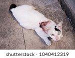 cat on street with feline... | Shutterstock . vector #1040412319