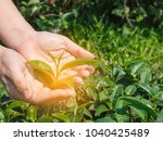 woman's hands protect holding... | Shutterstock . vector #1040425489