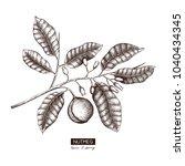 botanical illustration of...   Shutterstock .eps vector #1040434345