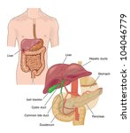 drawing of the digestive tracts ... | Shutterstock . vector #104046779