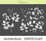 vector hand drawn medicinal ... | Shutterstock .eps vector #1040511169