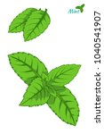 mint leaf  peppermint green... | Shutterstock .eps vector #1040541907