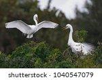 great egret  ardea alba ...   Shutterstock . vector #1040547079