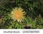 thistle in the pyrenees | Shutterstock . vector #1040580985