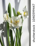 spring blooming daffodils | Shutterstock . vector #1040599447