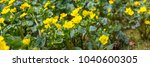 spring background with yellow   ... | Shutterstock . vector #1040600305