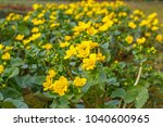 spring background with yellow   ... | Shutterstock . vector #1040600965