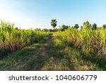 walk way in sugarcane field | Shutterstock . vector #1040606779