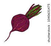 ripe beet   half of beetroot ... | Shutterstock .eps vector #1040631475