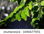Beautiful Green Leaves Backlit...