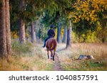 Stock photo young rider girl on bay horse in the autumn park at sunset teenage girl riding horse in park 1040857591
