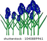 blue spring flowers  a muscari... | Shutterstock .eps vector #1040889961