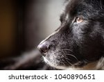 close up profile of old black... | Shutterstock . vector #1040890651