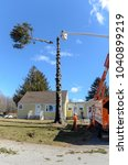 Small photo of Somerset, Massachusetts, USA - March 31, 2015: Top of 60-foot Norway Spruce drops after being cut away from rest of trunk