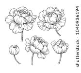 peony botanical drawing. vector ... | Shutterstock .eps vector #1040936194