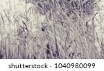 vintage style of nature...   Shutterstock . vector #1040980099