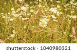 nature background from national ...   Shutterstock . vector #1040980321
