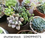 mix of flowering echeveria ... | Shutterstock . vector #1040994571