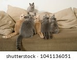 many cats sit on a couch and... | Shutterstock . vector #1041136051