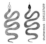 black and white snake vector... | Shutterstock .eps vector #1041137659