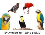 wild animal bird collection isolated - stock photo