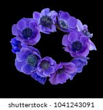 violet anemone bouquet on black ... | Shutterstock . vector #1041243091