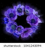 violet anemone bouquet on black ... | Shutterstock . vector #1041243094