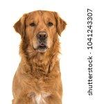 portrait of a pretty male...   Shutterstock . vector #1041243307