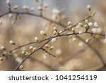 spring buds bush sprout | Shutterstock . vector #1041254119