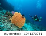 diver taking picture yellow...   Shutterstock . vector #1041273751