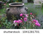 Pink Roses With Large...