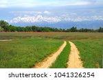 Rural Road Among Green Fields...
