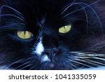 feline muzzle lying and... | Shutterstock . vector #1041335059