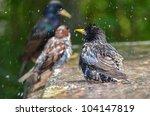 Birds take bath