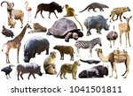 set of different african... | Shutterstock . vector #1041501811