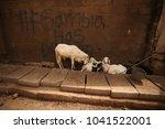 white goats family standing... | Shutterstock . vector #1041522001