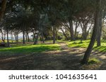beautiful forest near the sea... | Shutterstock . vector #1041635641