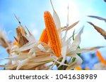 close up corn fields on the... | Shutterstock . vector #1041638989