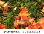 maple leaf. maple tree with... | Shutterstock . vector #1041663115