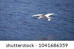 flying great egret bird ardea...   Shutterstock . vector #1041686359