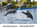dolphins jump in the water | Shutterstock . vector #1041687655